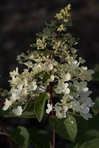 blomma4